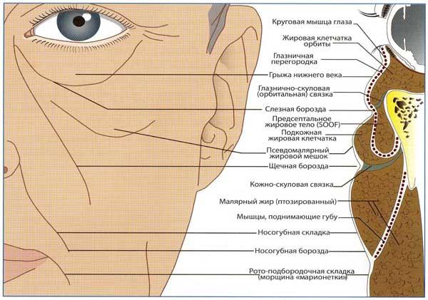 Схема проявления возрастных изменений мягких тканей лица и причины их возникновения.